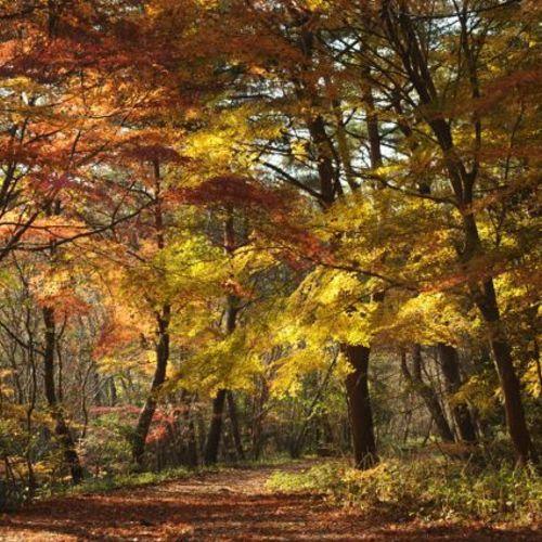 山撮り写真教室「燃える秋 - 穂高湖と紅葉の森 -」