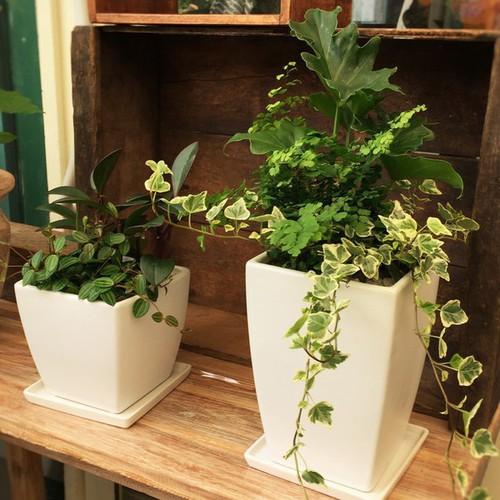 【6月】観葉植物の寄せ植え