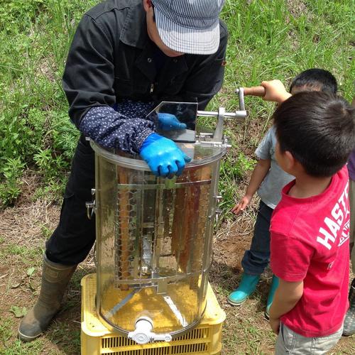 【6月採蜜体験ご予約頂いた方限定】採蜜体験 ※採れたてハチミツのお土産付き