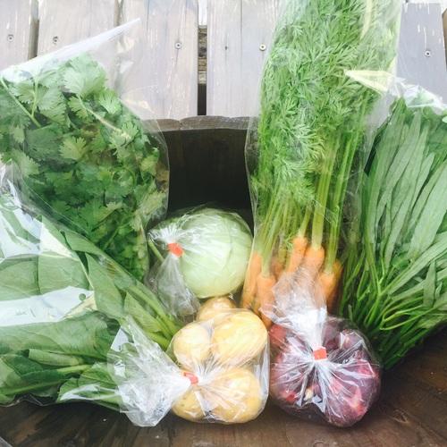 10月 Organics Day オーガニックで満たされる日