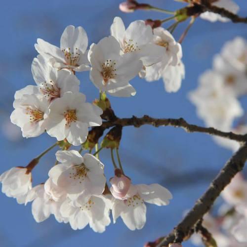 【レク】春と言ったら花見でしょ!@3/29