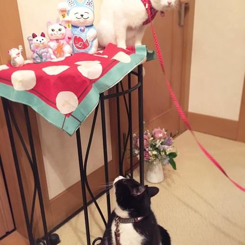 初登場!!!**チャサンポー!!Special workshop **招き猫に絵付けしよう♪