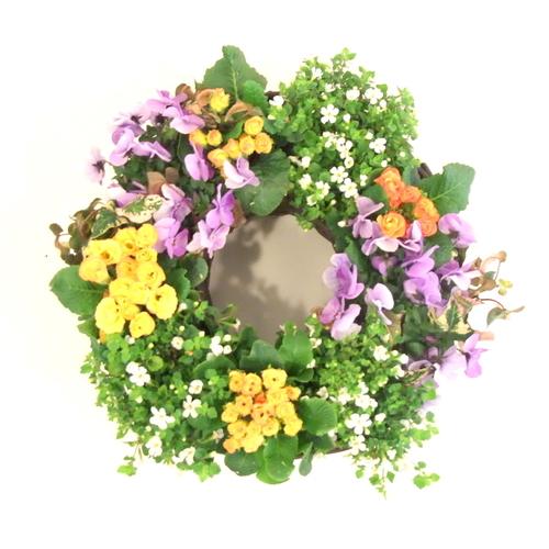 【3月】『プリムラのリースでお庭に早春の彩りを。』講師:村上 孝子