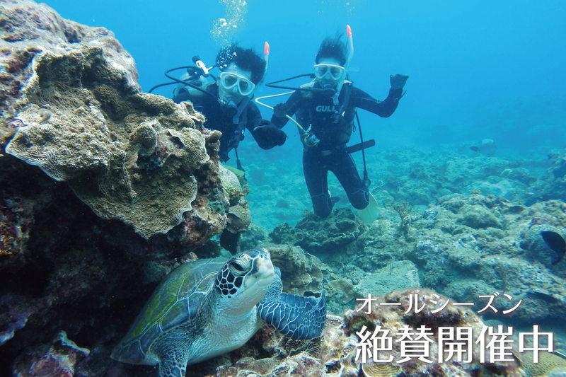 屋久島の海を堪能!『スキューバダイビング』を体験しよう!
