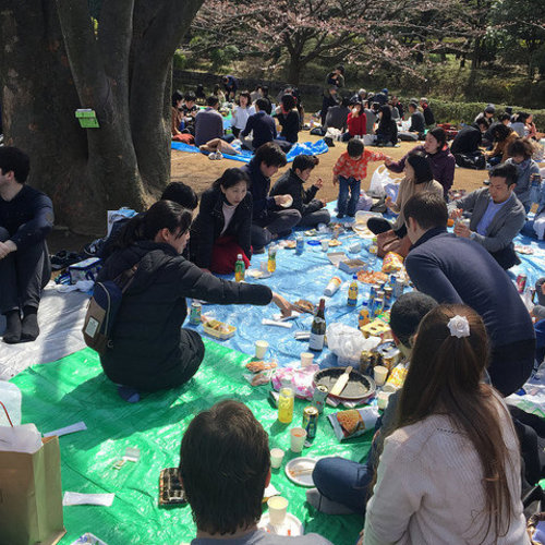 Ohanami party in Kitanomaru park