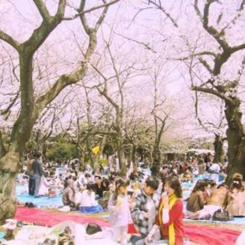 【4月1日(日) メンバー限定】🌸お花見🌸