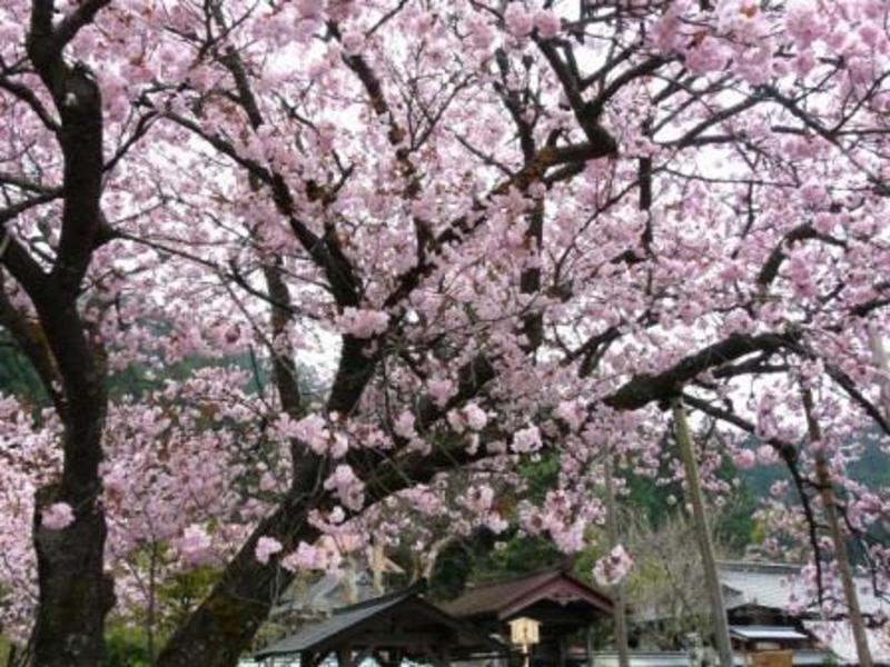4月23日 京都トレイル1期 第7回目