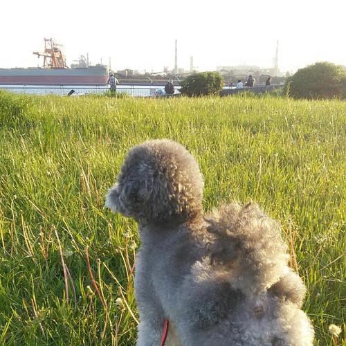 お散歩のみ:(月)(木)の1日1~2回 約25分 小型犬・中型犬・その他