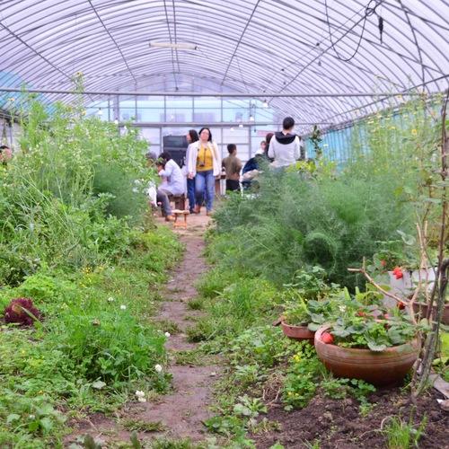 Organic Farming Experience program : 3.5h