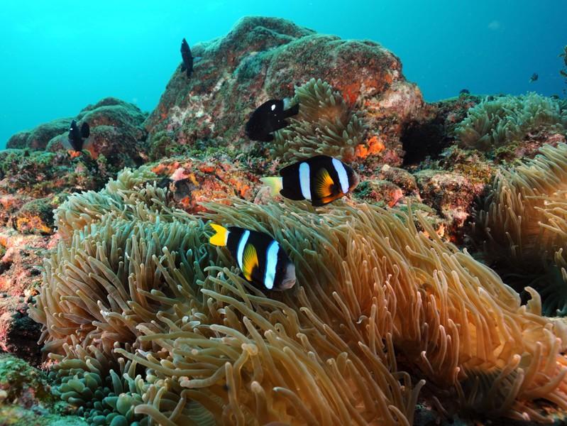 【体験ダイビング 午後コース】世界一深い海底ポストを目指そう!