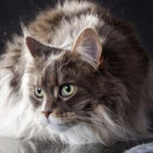 猫の飼い方講習会