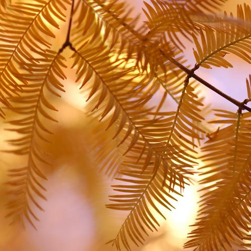 山撮り写真教室「冬の散歩道 - 風も撮ってみよ -」