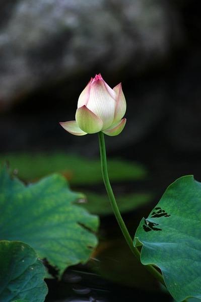 【プレミアム会員限定クラス】究極の癒しヨーガ・ニドラー