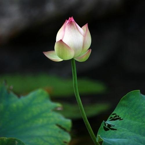 【YOGAワークショップ】究極の癒しヨーガ・ニドラー