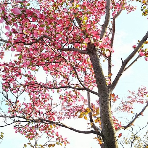 4/25(水)妄想朗読WS「稽古の時間」