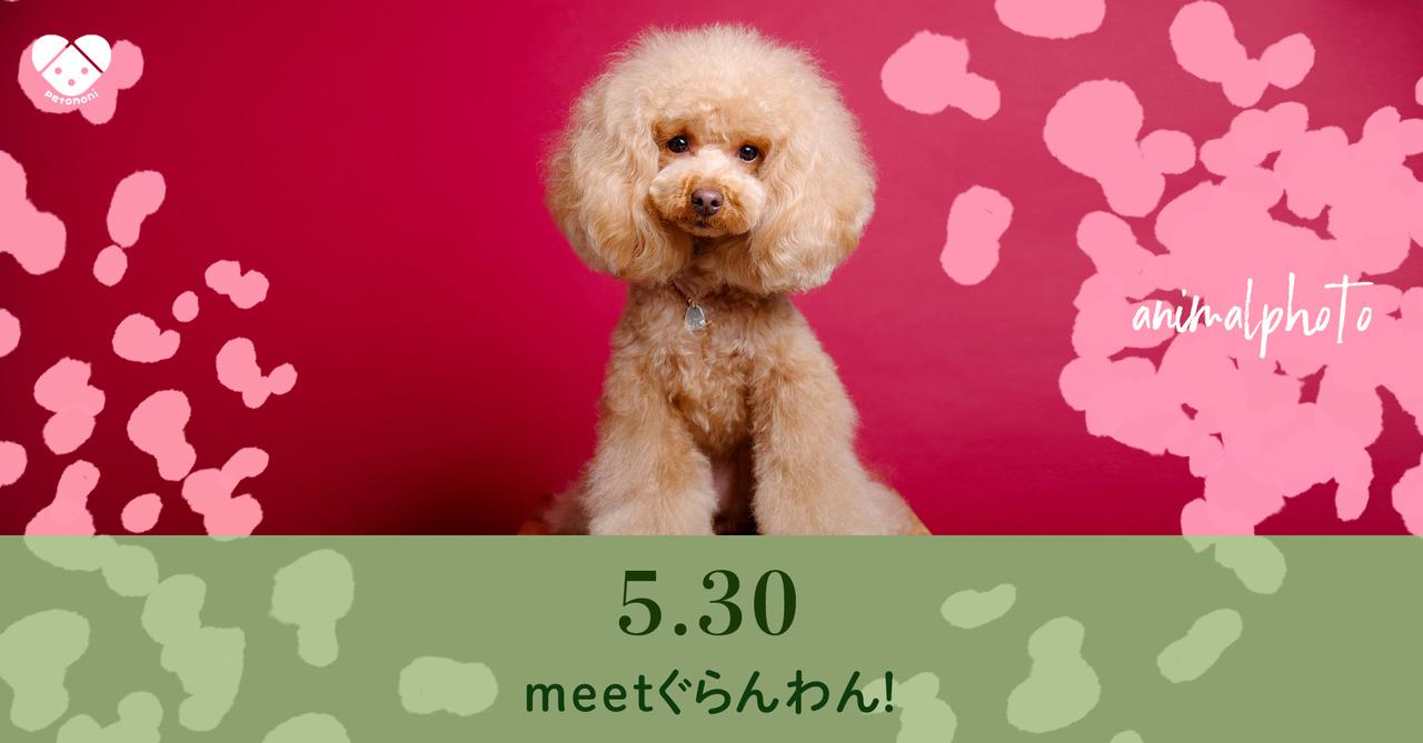 【meet ぐらんわん!】2021年5月30日(日)  petomoni 撮影イベント