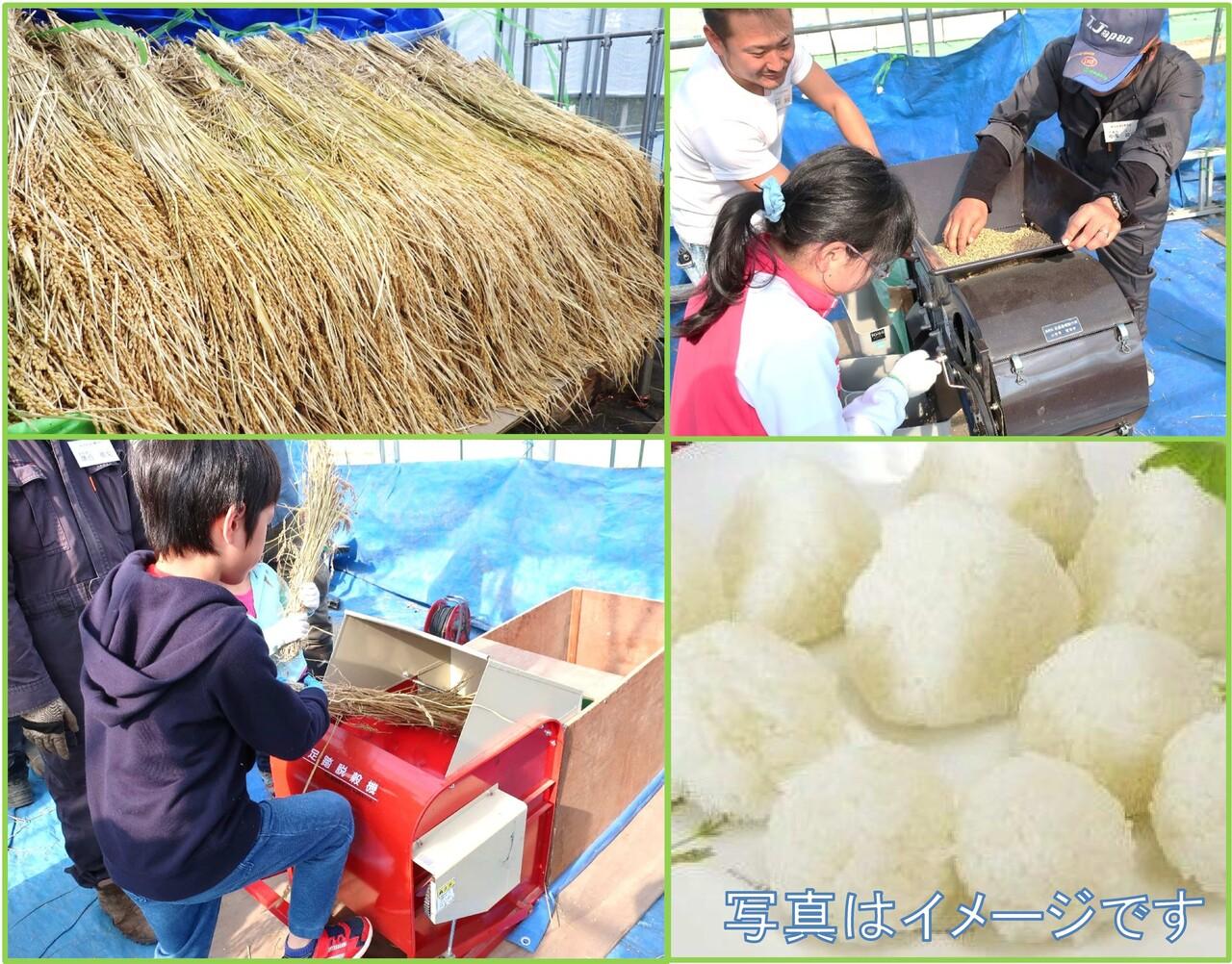 稲の脱穀と唐箕をしておにぎりを作ろう