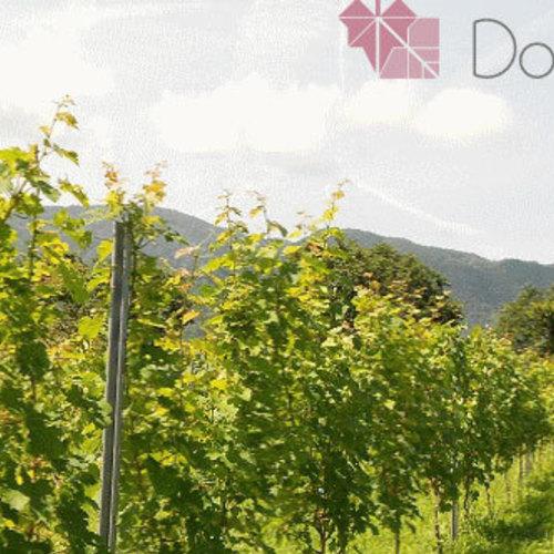 【オーナー様限定】9/16(月・祝) 「ドメーヌ・ショオ」 ワイナリー収穫体験会