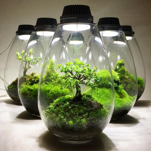 【 東京 】 コケテラリウム作成ワークショップ Mosslight-LED