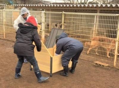 【ボランティア募集!】「セラピー犬の牧場 富士の里」で一緒に働きませんか?