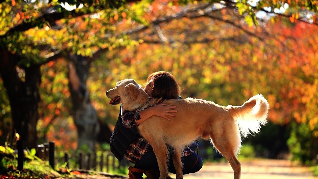 愛犬と家族の撮影会 秋色2020