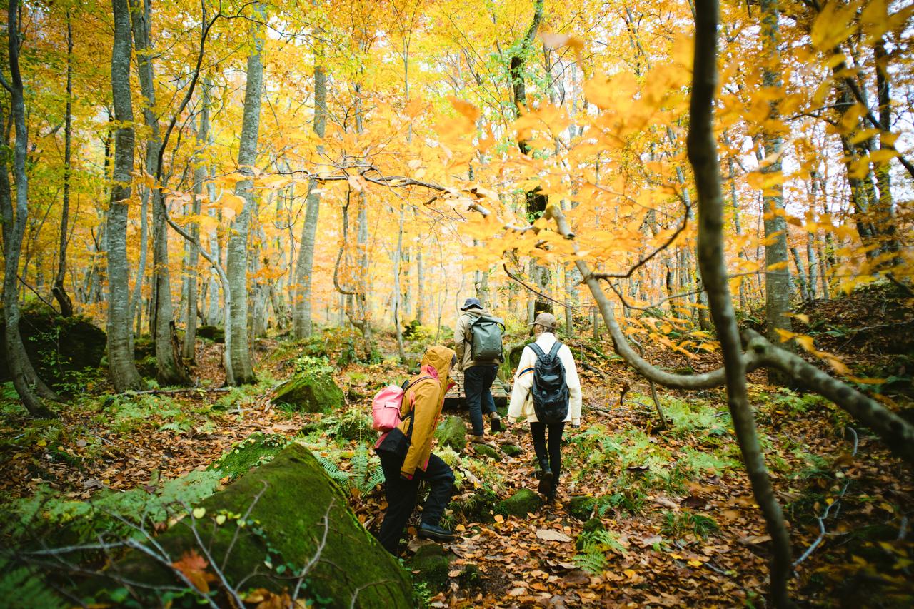 【ガイド案内】白神山地ハイキング (岳岱自然観察教育林)〜 原生的なブナの森を歩こう ~