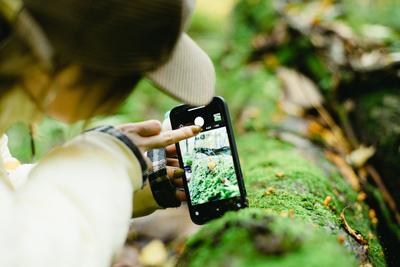 ガイドと歩く世界自然遺産・白神山地ハイキング (岳岱自然観察教育林)〜 原生的なブナの森を歩こう ~