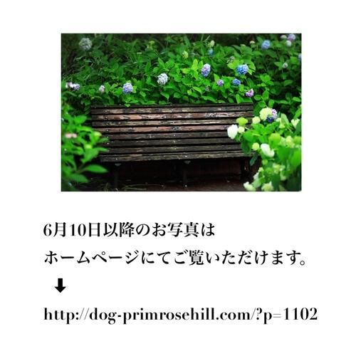 新緑と紫陽花 夙川2019