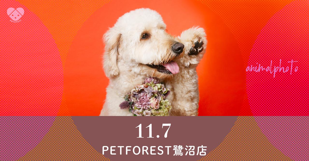 【ペットフォレスト鷺沼店】2021年11月7日(日)  petomoni 撮影イベント