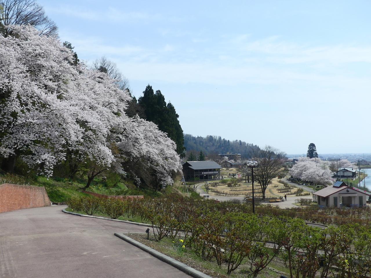 むらやま桜回廊バスツアー