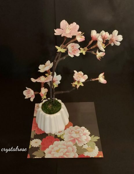 桜の苔玉盆栽づくり【練馬】2020年3月15日(日)