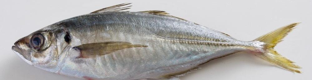 お魚「基本のき」