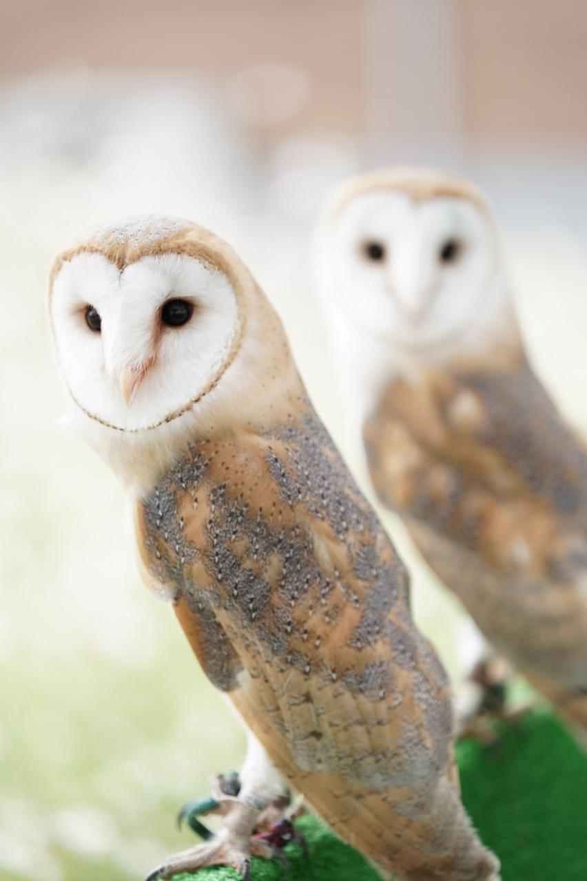 【川崎】学べる!ふれあえる!移動動物園-エサあげサービス-|2021年1月24日(日)