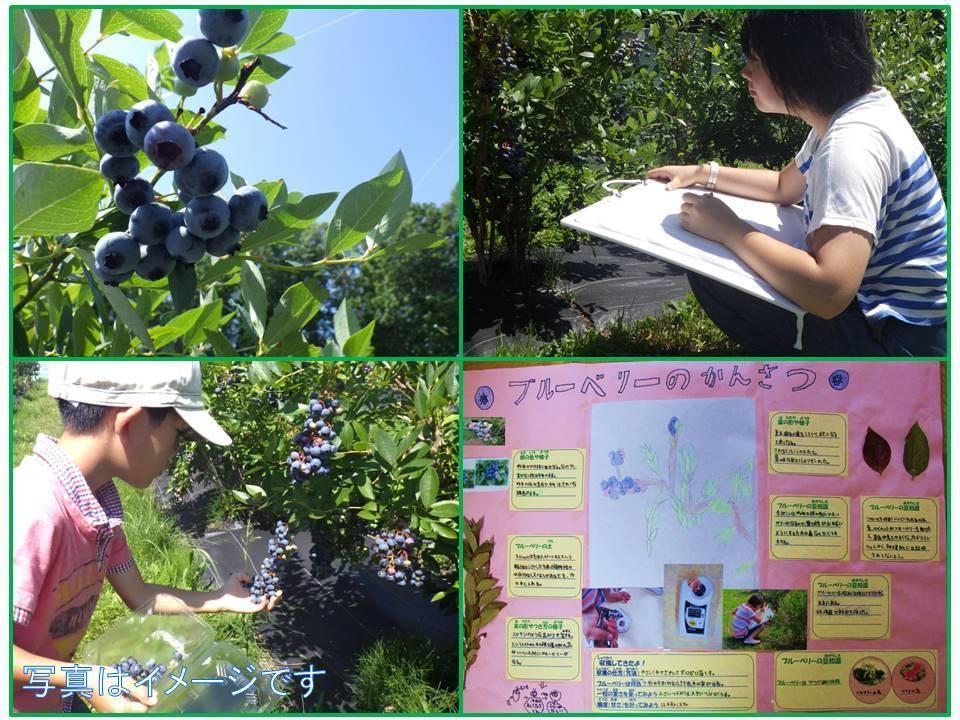 【夏休みの自由研究】ブルーベリーの世界を観てみよう!