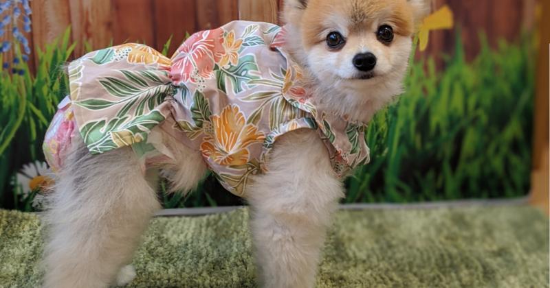 愛犬のラッフルワンピース(1dayホビー講座) ★動物愛護支援対象レッスン