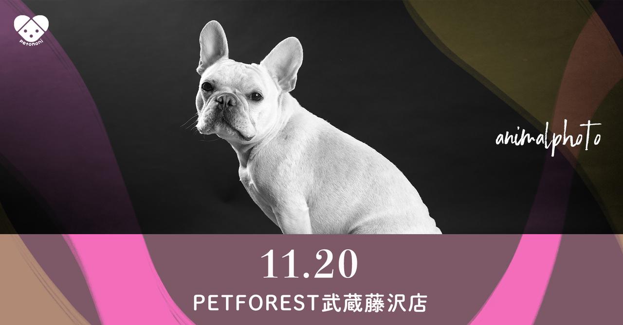 【ペットフォレスト武蔵藤沢店】2021年11月20日(土)  petomoni 撮影イベント