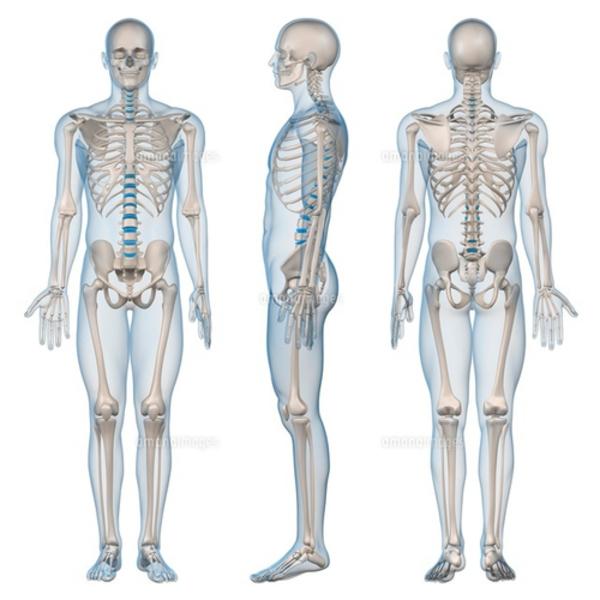 《4月ヘルスケアアカデミ−》動く体づくり学講座 第1回 《解剖学概要・姿勢の解剖学》4月11日 10:00〜13:10