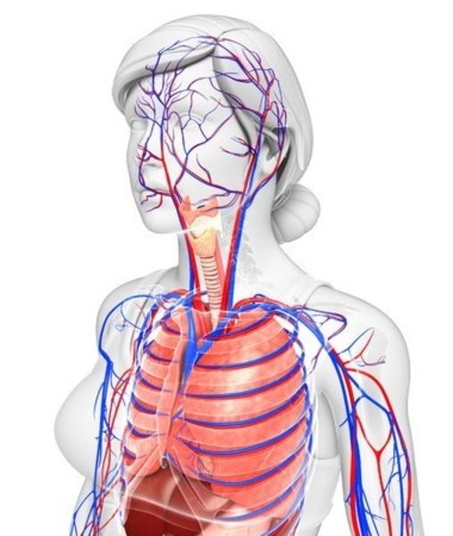 -中止-《10月ヘルスケアアカデミー》呼吸器のケア・風邪とインフルエンザ予防と回復 10月12日(土)12:00~