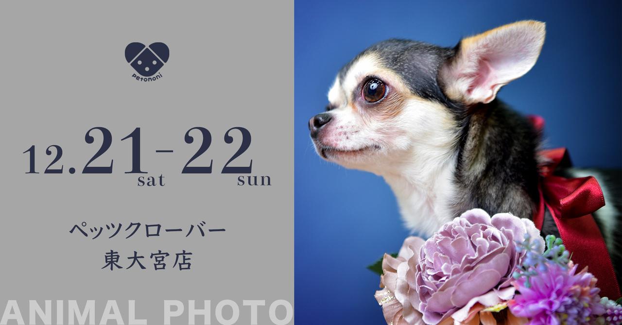 ジョイフル本田 Pet`s CLOVER 東大宮店 12月21日・22日(土・日)