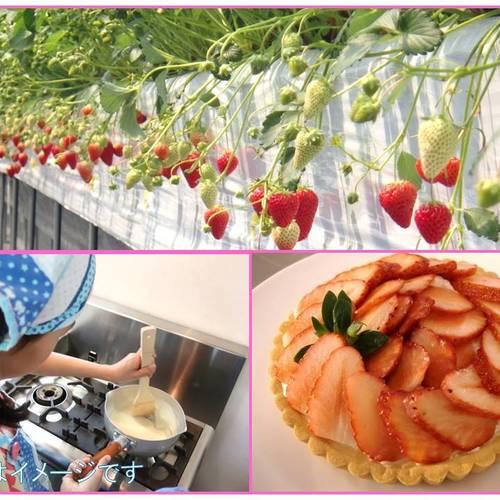 【バレンタイン企画】いちごを収穫してタルトを作ろう