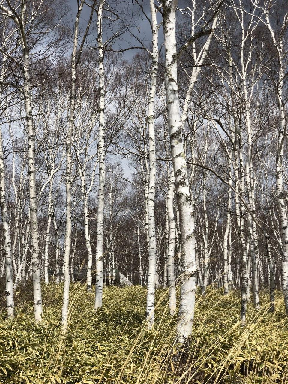 『緑あふれる自然との調和を感じる。里山の暮らしとヨガを堪能するのんびり2日間』