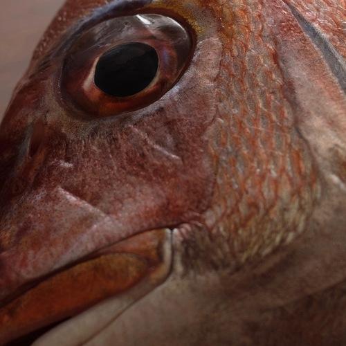 紅葉鯛の会