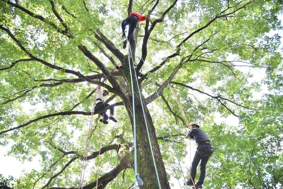 新緑触れるツリークライミング by TreeFrog OutDoor