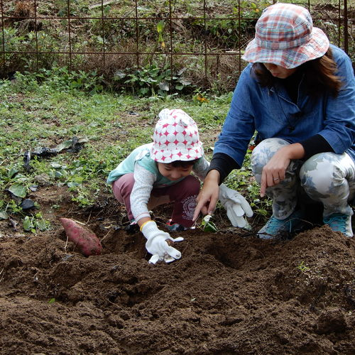 10月17日 すいすいクラス「さつまいも掘り」