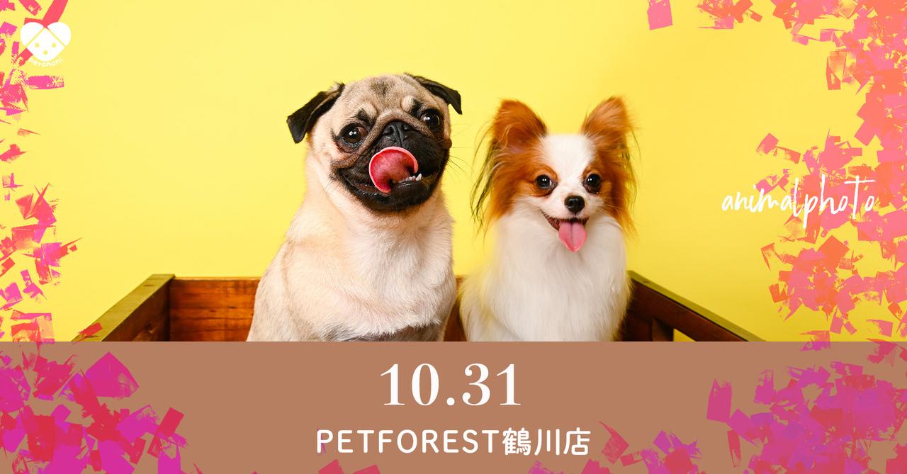【ペットフォレスト鶴川店】2021年10月31日(日)  petomoni 撮影イベント