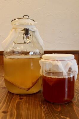 発酵食堂カモシカのコンブチャワークショップ