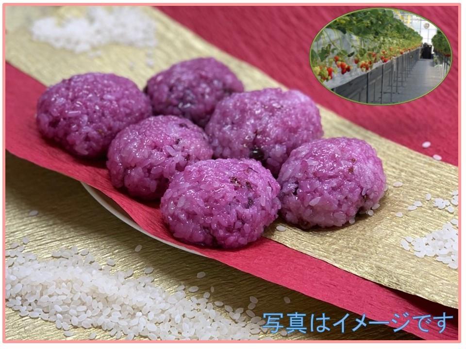 【ひな祭り企画】 ハスカップで桜餅風おはぎを作ろう (いちご収穫付)