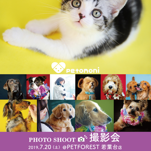 【PETFOREST 若葉台店】7月20日(土)  petomoni 撮影イベント