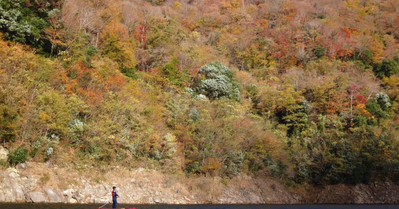 【広島・湖・SUP】レイククルージング~誰もいない静かな場所へ~(1日8名様限定)