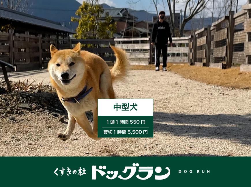 ドッグラン(中型犬 同時に10匹まで)